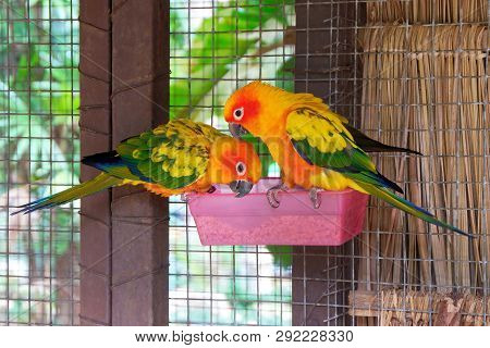 Lovely Photo Of Colorful Parrots Eating Birdseed