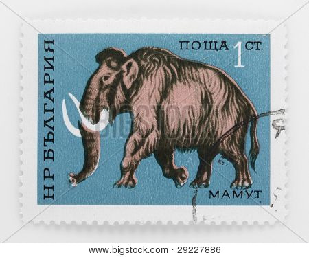 BULGARIA - CIRCA 1970: A stamp printed in The Bulgaria shows a Mammoth that lived from the Pliocene epoch from around 5 million years ago, into the Holocene at about 4,500 years ago, circa 1970.