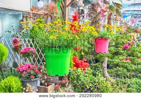 Colorful Spring Flowers In Gwangju , Jeollado, South Korea, Asia