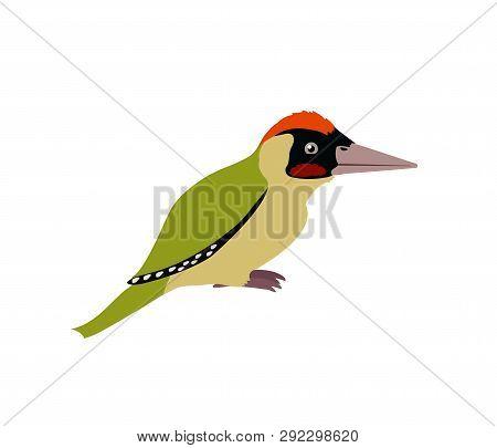 Vector Flat Cartoon Animal Clip Art Green Woodpecker