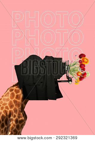 An Oldschool Photographer. A Giraffes Head As A Man Taking Photo By Old Vintage Camera And Lens With