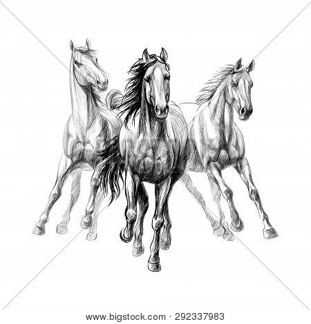 Three Horses Run Gallop On White Background, Hand Drawn Sketch. Vector Illustration Of Paints