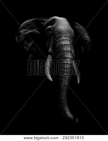 Portrait Of An Elephant Head On A Black Background. Vector Illustration