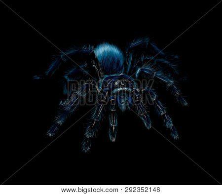 Portrait Of A Spider Tarantula Grammostola On A Black Background. Vector Illustration