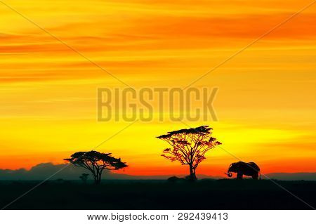 Silhouette Of African Elephant Against The Backdrop Of The Sunset In The Serengeti National Park. Af