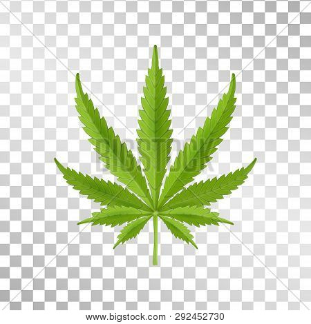 Hemp Leaf Isolated On Transparent Background. Realistic Marijuana. Cannabis Plant. Vector Illustrati
