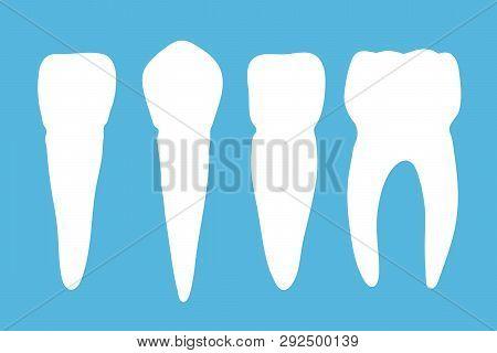 Set Of Different Molar Teeth On Blue Background. Vector Illustration.