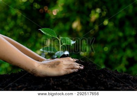 Little child hands take care and plant young seedling on a black soil. Earth day concept.