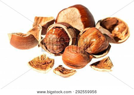 Natural Hazelnut Nut Shell Isolated On White Background