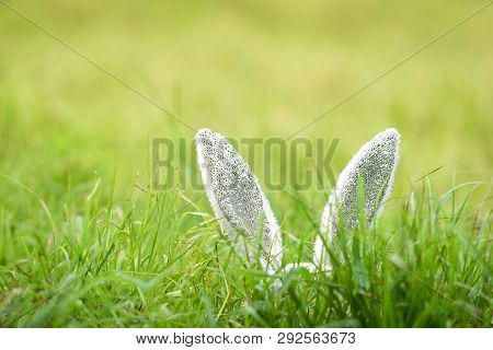 Easter Bunny On Green Grass Outdoor / Ear Rabbit On Field Spring Meadow Decorate Festival