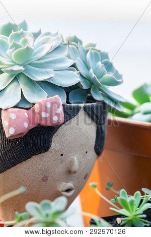 Close Up Image Of Echeveria Fleur Blanc Cactus In Pot