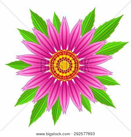 Echinacea Purpurea Vector Flower. Vector Illustration Of Echinacea Purpurea Blooming Flower With Gre