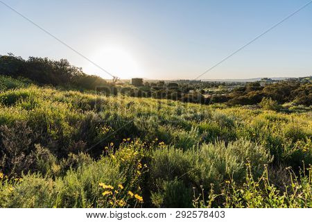 San Fernando Valley spring wildflower meadow sunrise at Santa Susana Pass State Historic Park in Los Angeles, California.
