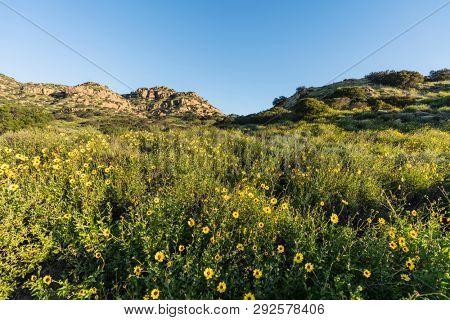 San Fernando Valley spring super bloom meadow at Santa Susana Pass State Historic Park in Los Angeles, California.