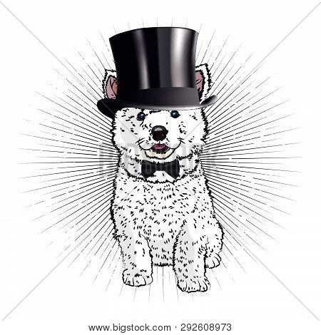 Cute Puppy Dandy. Funny Picture With A White Fluffy Dog. Retro Style.