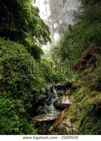 Misty Forest Iii