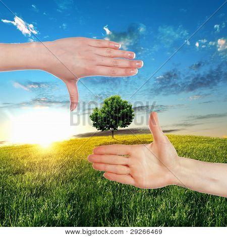 Manos humanas y planta verde