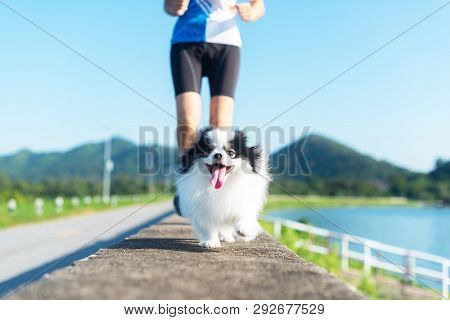 Puppy Dog ​​running Exercise With The Woman In The Morning