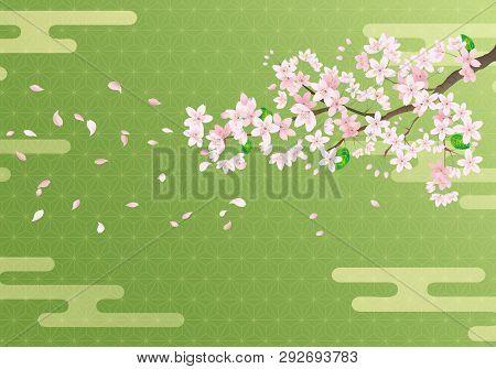 Cherry Blossom Sakura On Japanese Matcha Background