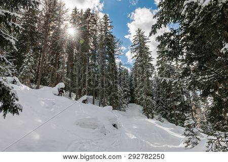 Stock Picture Of Snowy Winter Landscape With Trees And Blue Sky
