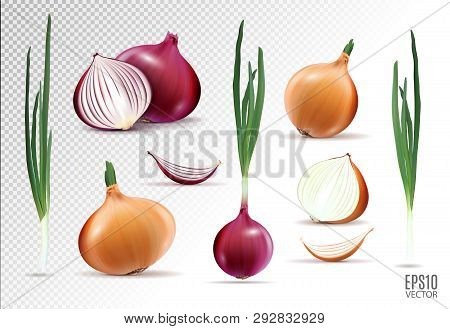 Vector Collection Of Onions With Slices Isolated On Transparent Background. Realistic 3d Vector Onio