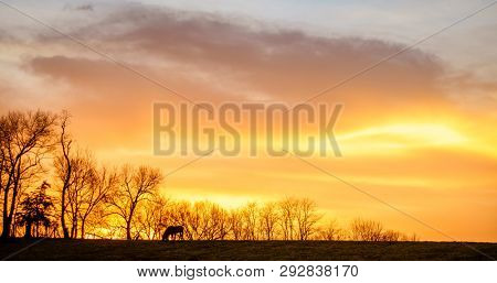 Horse grazing on a farm in Central Kentucky at sunset