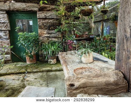 Interior of an old rustic green house with potted plants