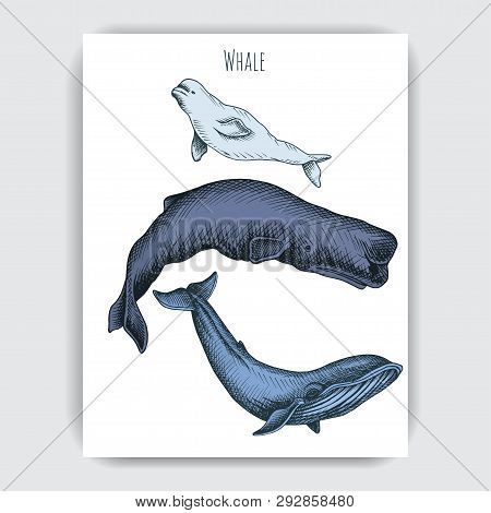 Card With Whale. Colorful Vector Illustration With Wildlifr Animals.