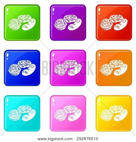 Nuts Icons Set 9 Color Collection Isolated On White For Any Design