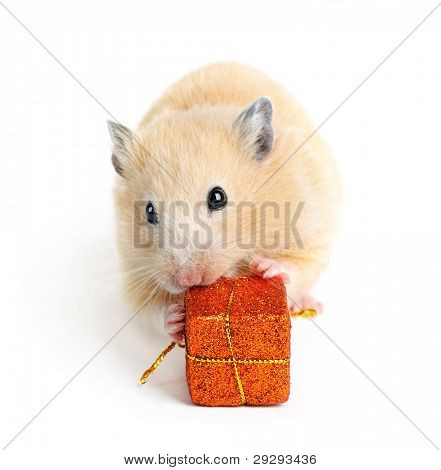 Little hamster with present isolated on white poster