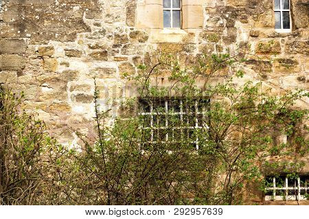 Stone Wall Of An Old Building With Windows And A Clambering Plant