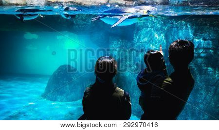 Yokohama,japan March 13,2019 Family Standing And Staring At A Group Of Emperor Penguins In The Displ