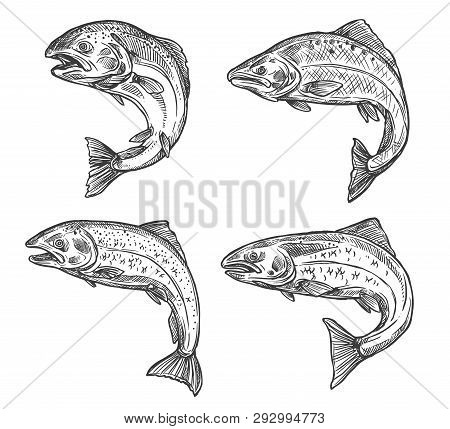 Salmon And Trout Fish Vector Sketch Isolated Icons. Fishing Symbols, Seafood And Fisher Catch Freshw