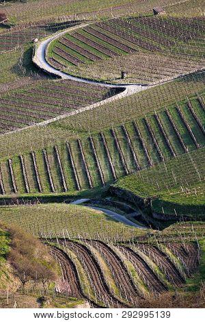Beautiful Spring Vineyards In Famous Wachau, Austria