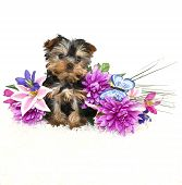 Very cute Yorkie puppy sitting with spring flowers on a white background. poster