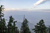 top of mountain, mountain trees, summit, vista poster