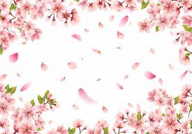 Pink Sakura Flower Frame On A White Background