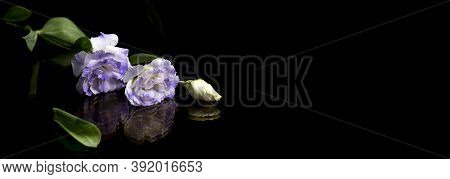 White Flowers On Black Background, Reflection. The Concept Of Mourning And Sorrow. Copy Space For Te