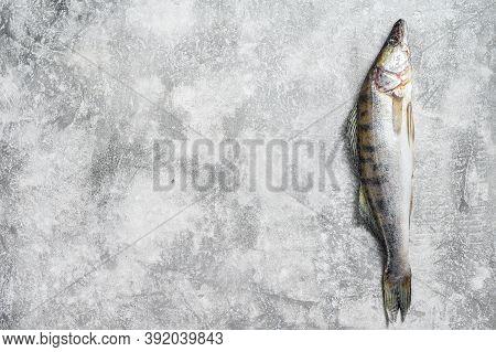 Raw Zander, Walleye Fish. Gray Background. Top View. Copy Space