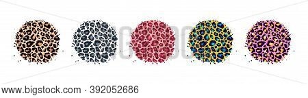 Leopard Print Textured Hand Drawn Brush Stroke Circle Shape Set. Abstract Paint Spot With Wild Anima
