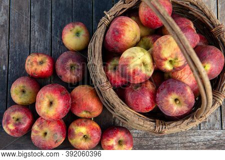 Basket Of Fresh Apples On The Wooden Table In The Garden