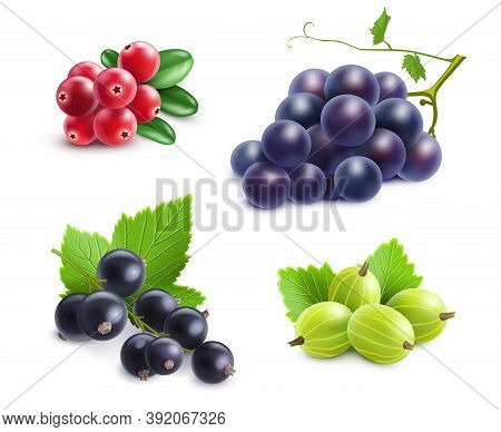 Realistic Berries Set With Cranberry Grape Gooseberry And Black Currant On White Background Isolated