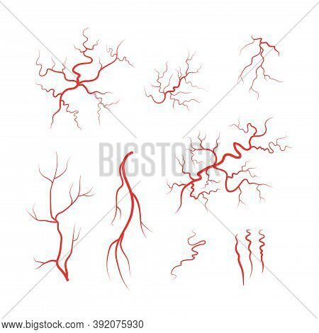 Human Veinsor Artery  Red Blood Vessel Set Vector Illustration Isolated On White Background.