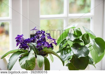 Plants And Flowers On A Window Ledge Inside A Bright Room With Light Coming From Window