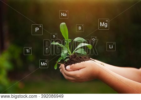 Nutrients Mineral In Soil And Plant. Digital Icon Of Mendeleev's Periodic Table. Close Up Of Hands H