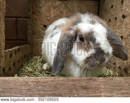 A White Bunny Rabbit Sitting In A Box With Hay.