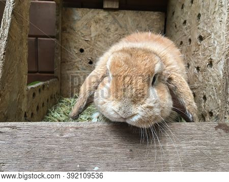 A Brown Bunny Rabbit Sitting In A Box With Hay.