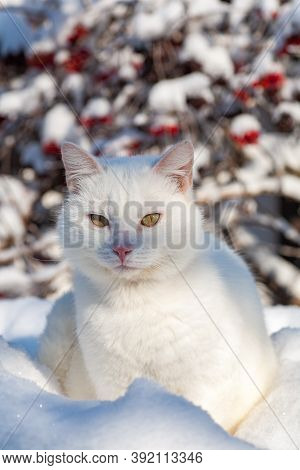 Cat In The Snow. The Cat Froze Over In The Winter Outside, Covered In Cold The Street. The Cat Is Pl