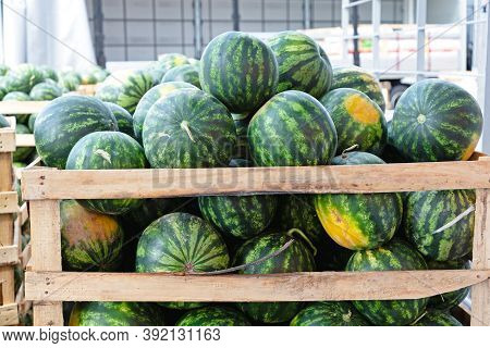 Big Watermelons In Crates At Wholesale Warehouse