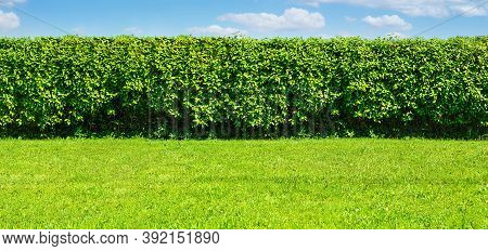 Wide Summer Garden Template - A Green Lawn And A Long Big Hedge On A Blue Sky Background With Copy S